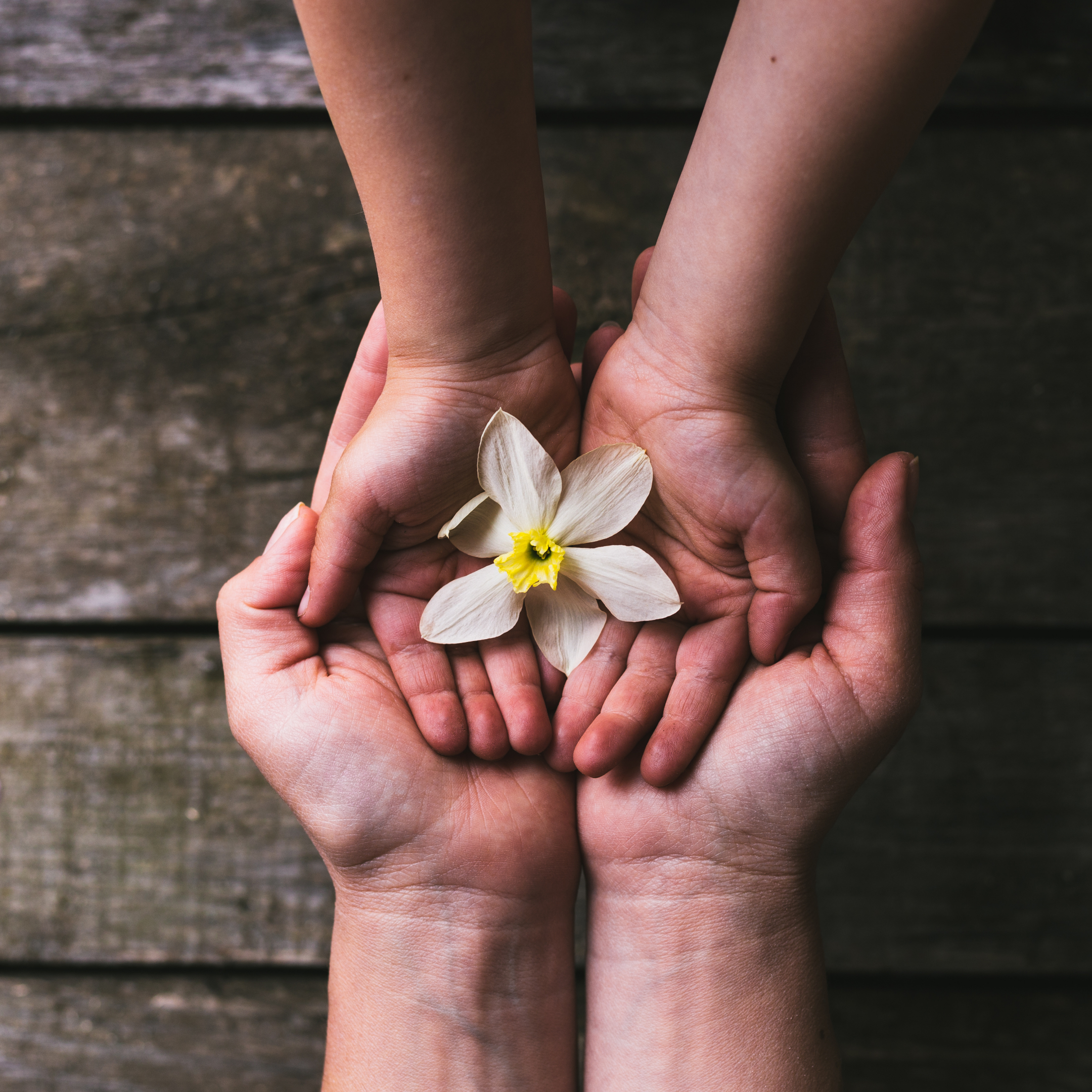 parent's hands supporting child's hands holding flower