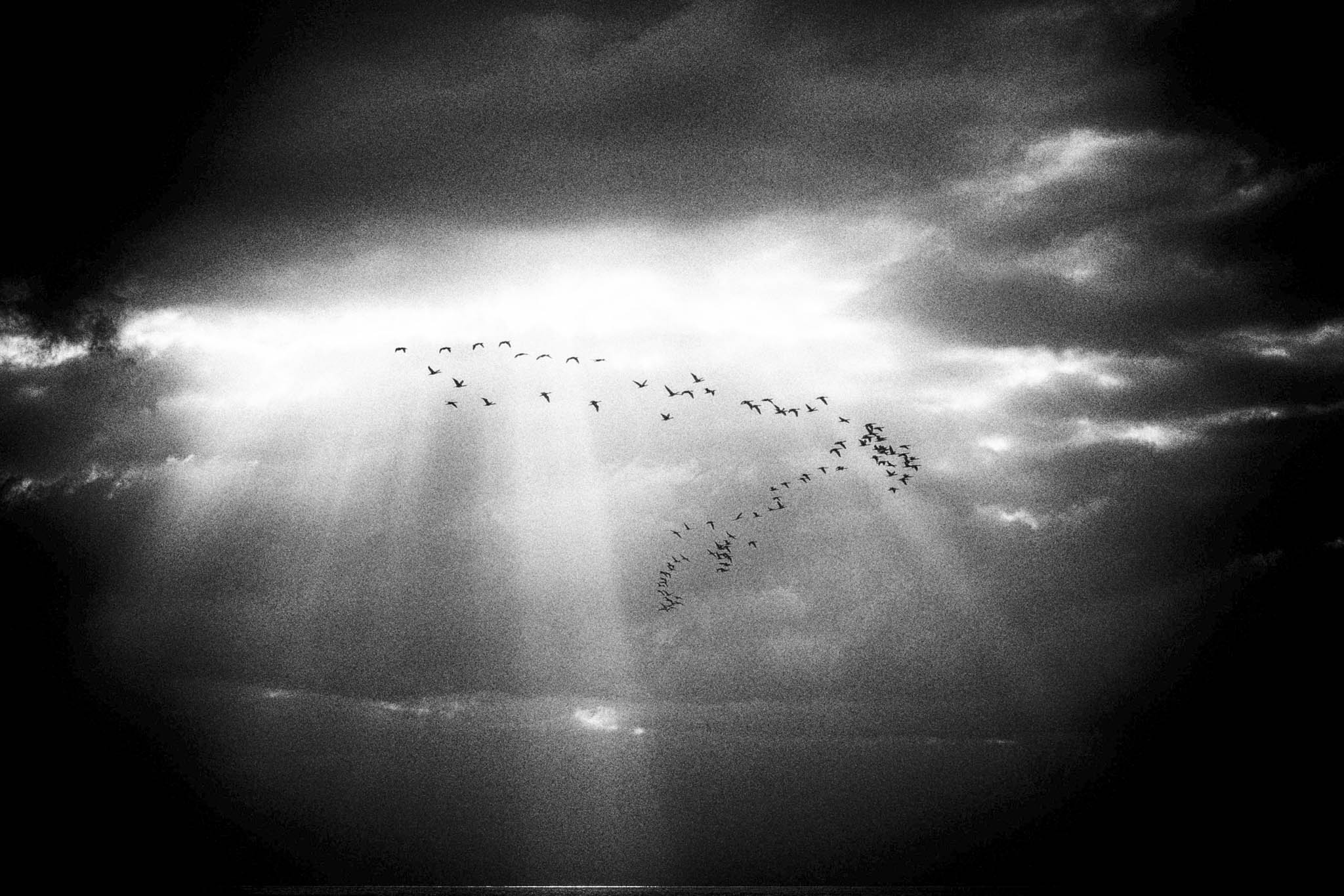 Clouds and birds in Black and white