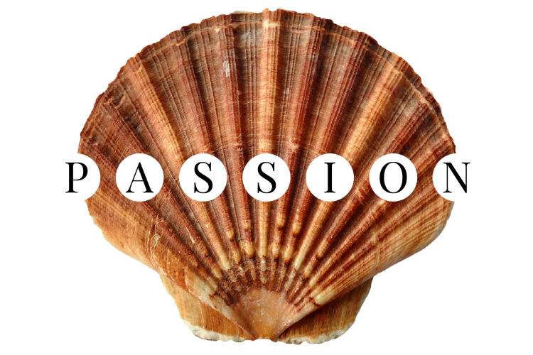 Image of a brown scallop seashell with the word PASSION.