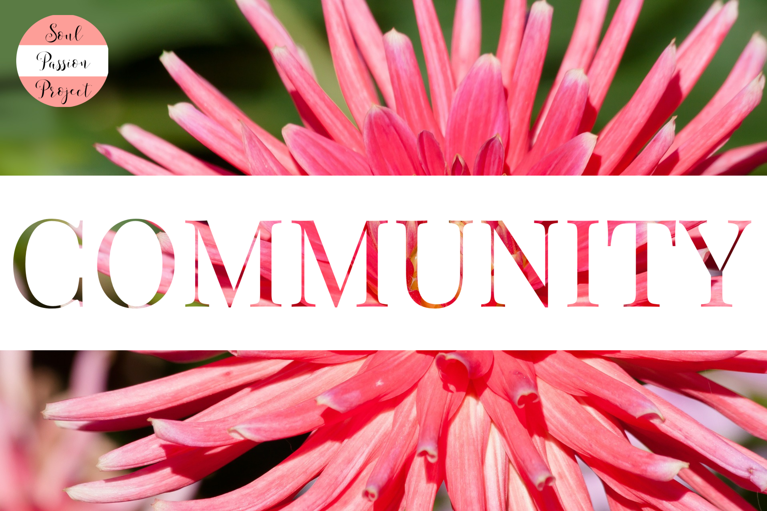 Image is a rectangle with a background image of a pink flower with bursting rays of petals with a white banner running through the middle with the word COMMUNITY in a cutout font allowing the flower to show through the lettering. The Soul Passion Project Logo is in the upper right corner of the image.