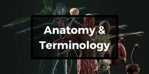 Anatomy & Terminology