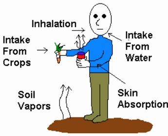 scope and limitation of effects of air water and soil on biodiversity Additionally, the use of bio-fertilizers can improve productivity per area in a relatively short time, consume smaller amounts of energy, mitigate contamination of soil and water, increase soil fertility, and promote antagonism and biological control of phytopathogenic organisms (chirinos et al 2006 corpoica 2007 porcuna et al 2002.
