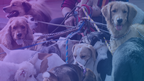 Canine Social & Sexual Behavior