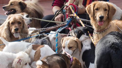 Social Behavior and the Doggy Dominance Myth