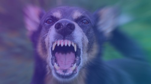 The Treatment and Prevention of Dog Aggression: Biting and Fighting