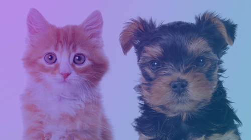 Dog and Cat Behavior Problems