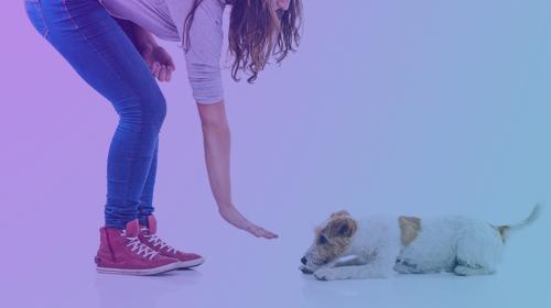 SIRIUS Dog Trainer Academy (4 Days)