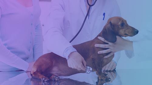 Practical Behavior Information for Veterinary Practitioners