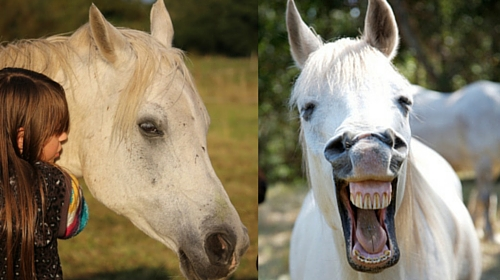 Senior Horse: Meridian Massage and Acupressure