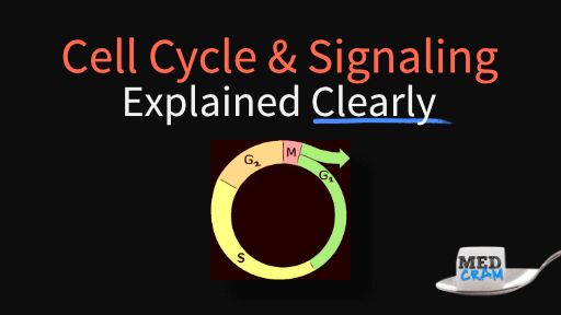 cell cycle, cell signaling, and disease explained clearly