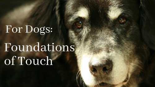 For Dogs : Foundations of Touch for Connecting and Healing