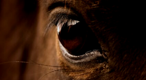 For Horses : Foundations of Touch for Connecting and Healing