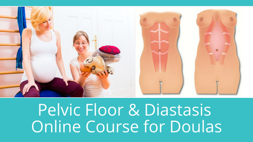 Pelvic Floor & Diastasis - Online Course for Doulas