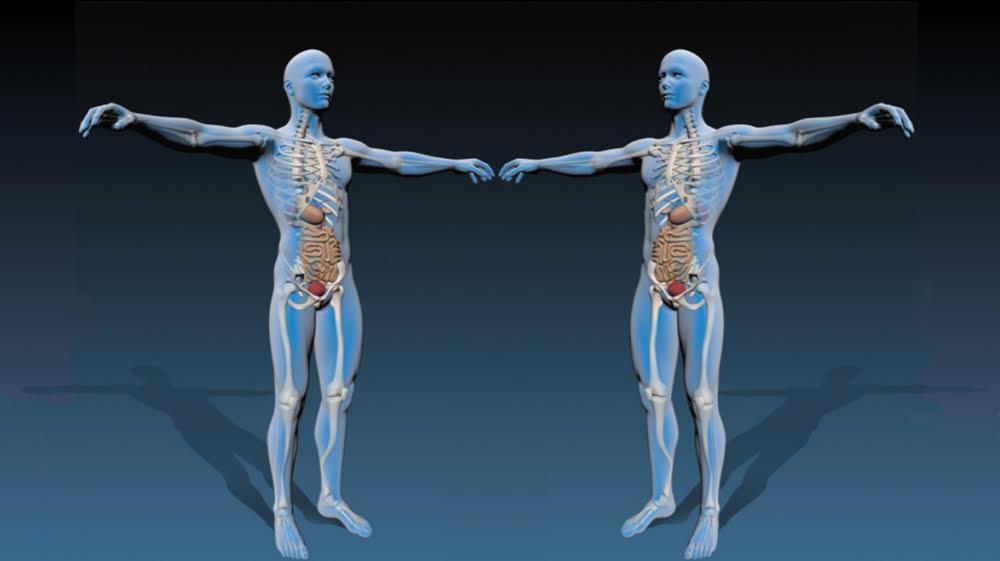 Phoenix Level 2 anatomy & physiology