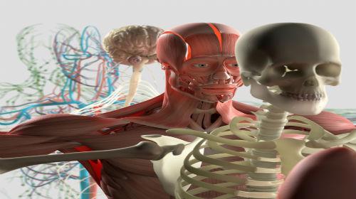 Level 3 anatomy & physiology