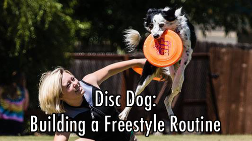 Building Disc Dog Freestyle Routines