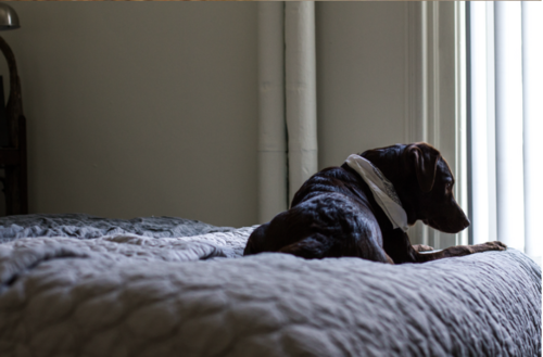 Resolving Separation Anxiety in Dogs
