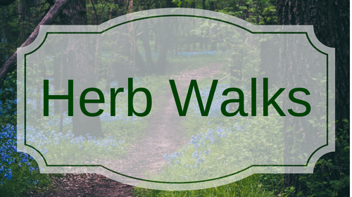 Herb Walks