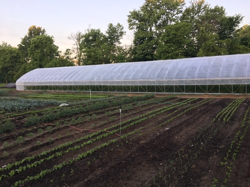 Greenhouses, Processing Rooms, and Other Infrastructure