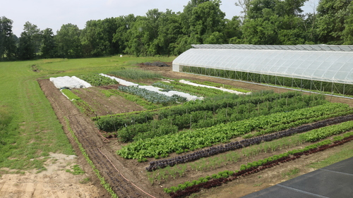 Farm Layout, Bed Preparation, and Cover Cropping