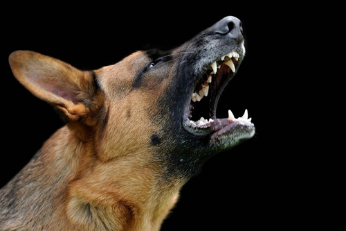 Master Course - Aggression in Dogs
