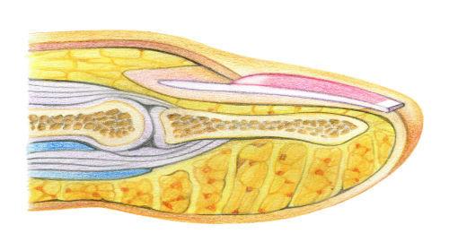 manicure & pedicure anatomy