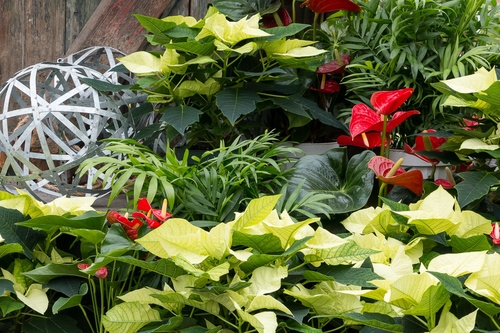 DECK THE HALLS: Creating Sensational Holiday Containers
