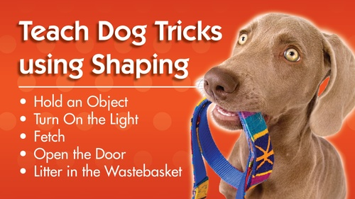Teach Dog Tricks Using Shaping