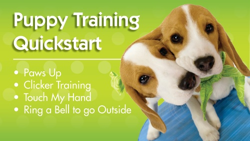 Puppy Training Quickstart