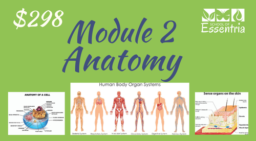 Aromatherapy Certification - Module 2 - Anatomy