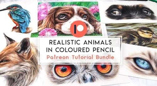 Realistic Animals in Coloured Pencil