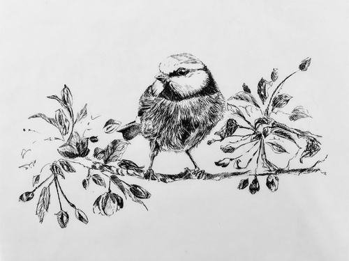 Spring Chickadee Pen And Ink