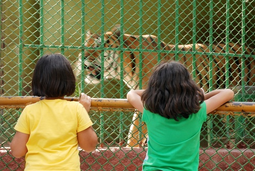 Evidence Packet - Zoos Should Be Banned