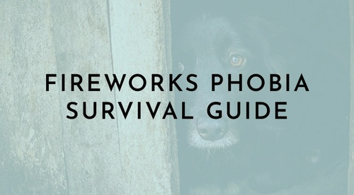 Fireworks Phobia Survival Guide