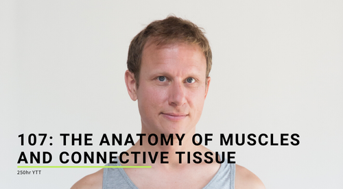 107: Anatomy of Muscles and Connective Tissue