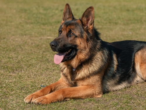 Service Animals and Emotional Support Animals