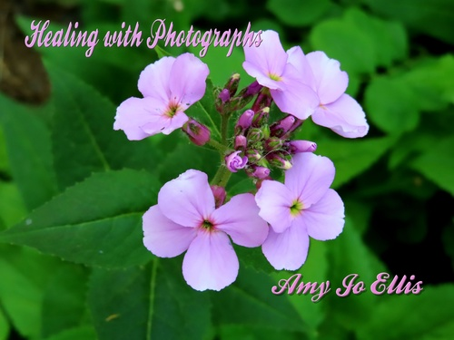 Healing with Photographs