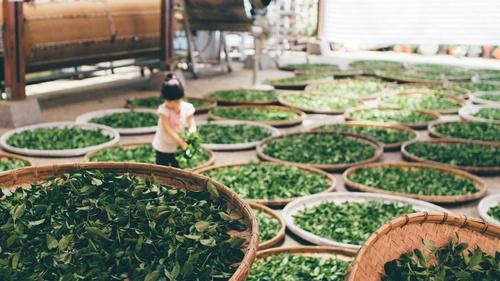 Tea Foundation - Module 2