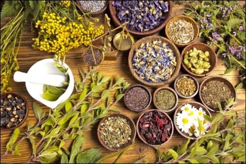 Sacred Journey School Of Herbalism