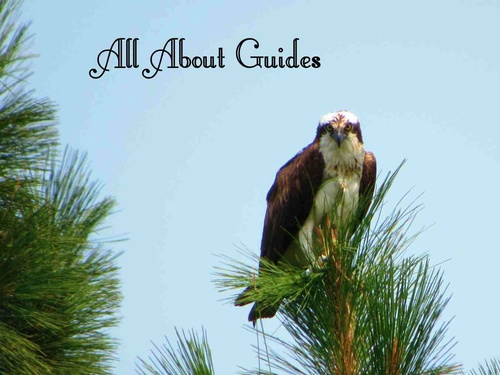All About Guides