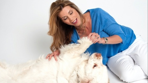 Webinar - Recognizing Pain in Dogs