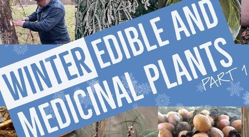 Edible & Medicinal Trees: WINTER SEASON