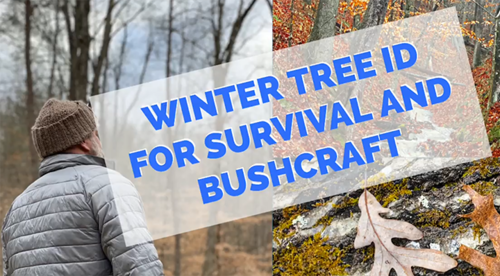Winter Tree Identification for Survival & Bushcraft
