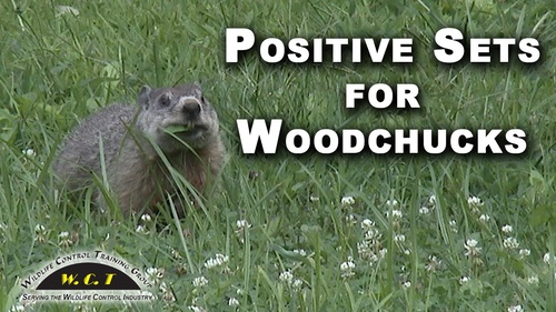 Positive Sets For Woodchucks