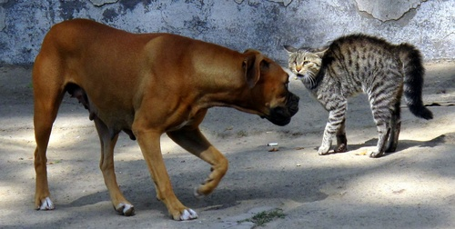 Webinar - Dog to Cat Aggression