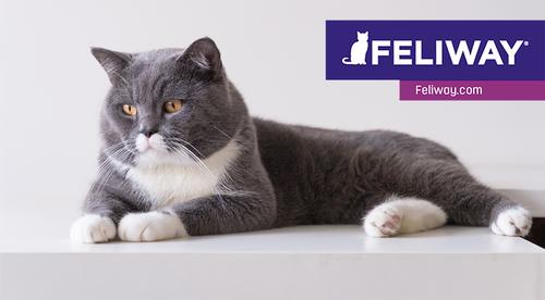 FELIWAY-Produktschulung: Verhaltensprobleme bei der Katze verstehen und lösen