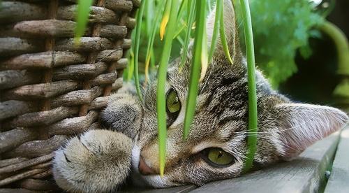 14 avril 2021 : Les plantes et les huiles essentielles pour les animaux | atelier en vidéoconférence