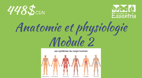101, 201 or 301: Anatomie et physiologie - Module 2