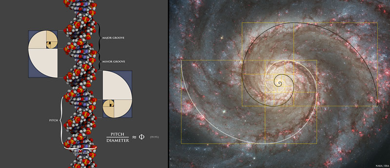 Golden ratios are shown within DNA (left) and a spiral galaxy (right); images from my book The Divine Proportion.