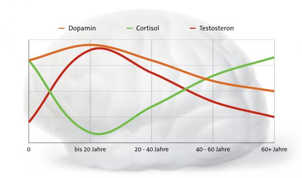 Hormonspiegel im Laufe des Lebens